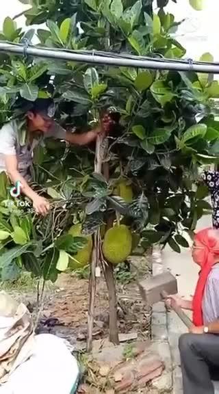 clip-khao-mit.mp4